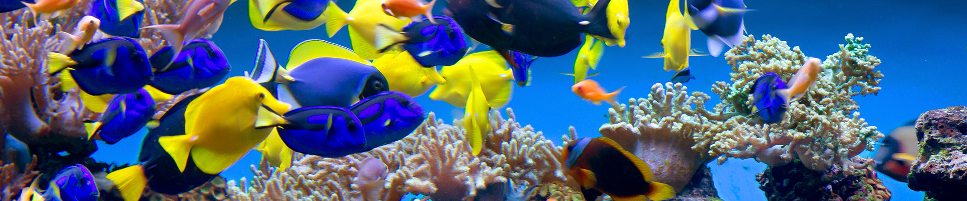 biouv-visuel-aquariums_2