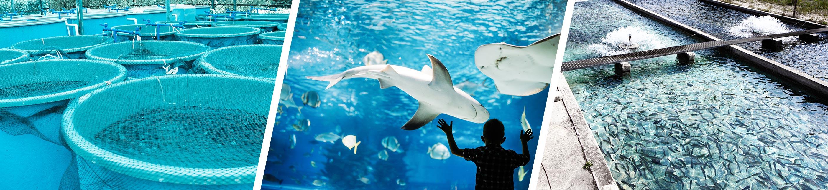 tetiere-aquarium-aquaculture